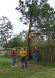 A TRICKY TREE REMOVAL BEGINS