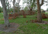 A LOT OF DOWNED AND DAMAGED TREES HERE