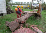 MAYBE NEXT TIME WE CAN BRING A BIGGER CHAINSAW???