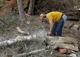 CUTTING UP A DEAD TREE IN SNAKE COUNTRY