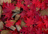 RED LEAVES AND ROCKS - ISO 80