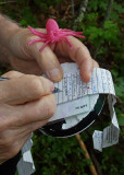 SIGNING A GEOCACHE LOG SHEET  -  ISO 400