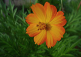 LX5 FLOWER IMAGE TEST  -  ISO 400