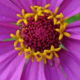 LX5 FLOWER IMAGE TEST  -  ISO 200