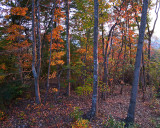 THE SETTING SUN PROVIDES SIDELIGHTING FOR FALL FOLIAGE IN OUR BACK YARD  -  ISO 200