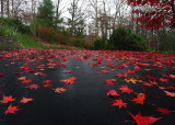 RED LEAVES  -  ISO 100