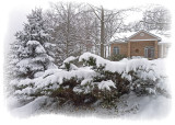 JANUARY SNOW  -  ISO 80  -  BORDER TREATMENT APPLIED