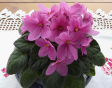 AFRICAN VIOLET - HAND-HELD AT 1/25 SECOND