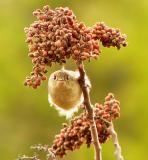 moreranchbirds