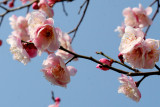 The very first CherryBlossom at Naksansa Temple