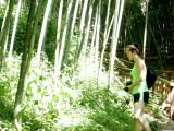 Bamboo Park 1.jpg