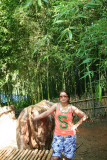 Bamboo Park 7.jpg
