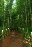 Bamboo Park 8.jpg