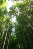 Bamboo Park 9.jpg
