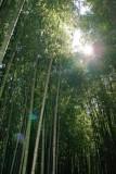 Bamboo Park 11.jpg