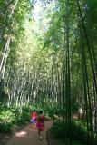 Bamboo Park 12.jpg