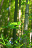 Bamboo Park 16.jpg
