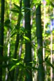 Bamboo Park 17.jpg