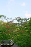 Sosweawon Garden 14.jpg