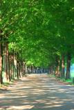 Metasequoia 3.jpg