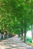 Metasequoia 4.jpg