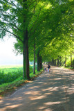 Metasequoia 5.jpg