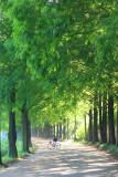 Metasequoia 6.jpg