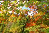 Woljeongsa Temple Needle Fir Forest