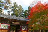 2nd trip - Woljeongsa temple-Famous maple tree