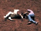 Wrestling with a bull