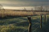 Fence Line on a Frosty Morning