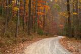 Moving Through Autumn