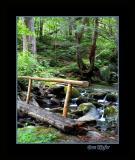 Log Bridge on Trail