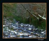 West Prong Little Pigeon River