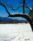 Across the Snow