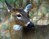 He's Back, Deer.