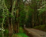 Woodland Road in Spring