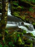 A Stream in the Rain