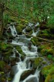A Small Stream in North Carolina