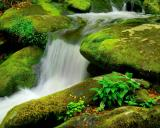Roarning Fork Green