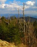 North Carolina from Clingmans Dome