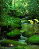 Elkmont Green