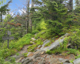 AT Just South of Clingmans Dome