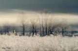 Frost, Fog and Treeline