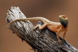 Various reptile sightings