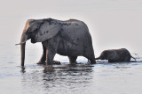 Chobe Elephant 2.jpg