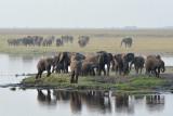 Chobe Elephant 3.jpg