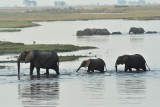 Chobe Elephant 4.jpg
