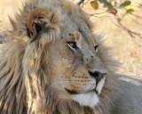 Kwai Lion
