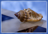 Shell on the Edge
